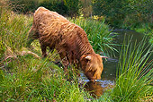 COW 02 KH0114 01