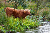 COW 02 KH0115 01