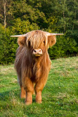 COW 02 KH0119 01