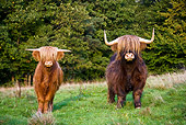 COW 02 KH0120 01