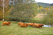 COW 02 KH0123 01