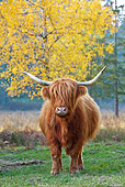 COW 02 KH0124 01