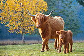 COW 02 KH0127 01