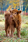 COW 02 KH0128 01