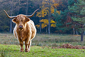 COW 02 KH0133 01