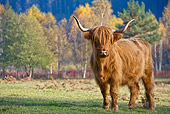 COW 02 KH0134 01