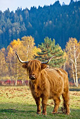 COW 02 KH0135 01