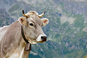 COW 02 KH0148 01
