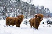 COW 02 KH0157 01