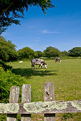 COW 02 KH0172 01