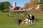 COW 02 LS0077 01
