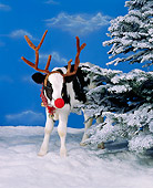 COW 02 RK0013 05