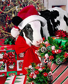 COW 02 RK0014 11