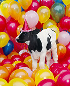 COW 02 RK0016 07