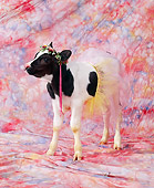 COW 02 RK0018 15