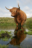 COW 02 WF0004 01