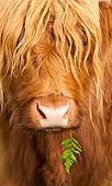COW 02 WF0005 01