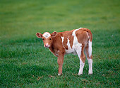 COW 02 KH0024 01