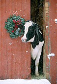 COW 02 LS0002 01