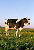 COW 02 LS0003 01