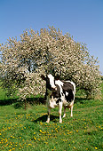 COW 02 LS0005 01