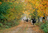 COW 02 LS0009 01