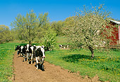 COW 02 LS0010 01