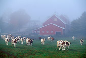 COW 02 LS0017 01