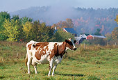 COW 02 LS0018 01