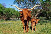 COW 02 LS0022 01