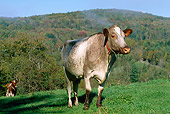 COW 02 LS0023 01