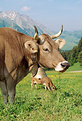 COW 02 LS0040 01