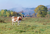 COW 02 LS0060 01