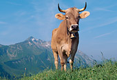 COW 02 LS0063 01