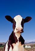 COW 02 RK0003 44
