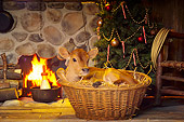 COW 02 RS0004 01