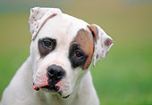 DOG 01 AB0002 01