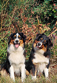 DOG 01 AB0006 01