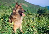 DOG 01 AB0012 01