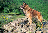 DOG 01 AB0013 01