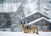 DOG 01 AB0019 01