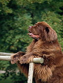 DOG 01 AB0027 01