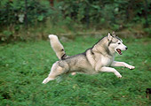 DOG 01 AB0029 01