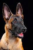 DOG 01 AC0020 01