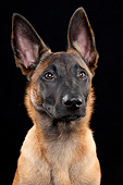 DOG 01 AC0021 01