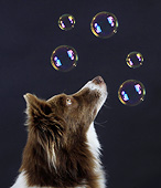 DOG 01 AC0024 01