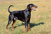 DOG 01 AC0025 01