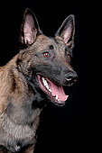 DOG 01 AC0027 01