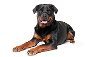 DOG 01 AC0029 01