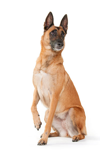 DOG 01 AC0032 01